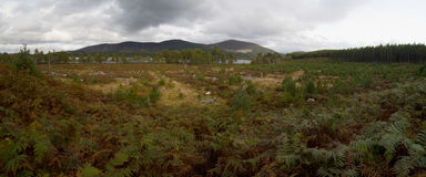 Loch Morlich Scotland UK Royalty Free Stock Photo