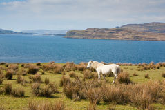 Loch Na Keal Royalty Free Stock Images