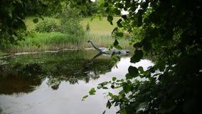 Loch Ness, Escocia Reino Unido almacen de video