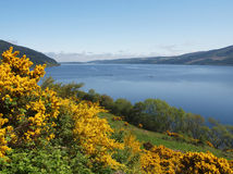 Loch Ness, Scotland. Beautiful view of Loch Ness in Scotland on a summer's day. Yellow heather flowers and blue sky with the lake waters and mountains of the Royalty Free Stock Images