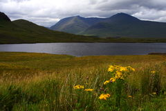 Loch and wetland, scotland Stock Images