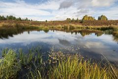 Autumn colour and moorland by small lochan on moor at Aviemore in the Cairngorms National Park of Scotland. Royalty Free Stock Photos