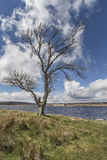 Lochindorb auf Dava Moor in Schottland stockbilder