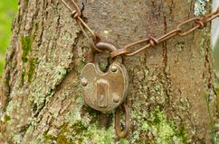 Lock hanging on the iron chain. Lock hanging on the iron chain,around a large tree Stock Image