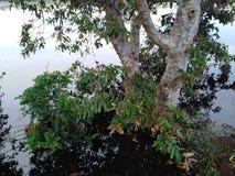 Lock som doppas i vattenmörkervattnet, träd som omges av vatten royaltyfri bild