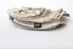 Lock treasure. One smokey quartz held on by an oyster shell Royalty Free Stock Photo