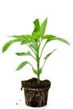 lockbegrepp som illustrerar nya plantor för livstid Royaltyfria Bilder