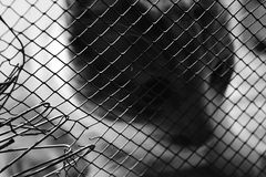 Locked cat Stock Photos