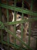 Locked Dog Stock Photos