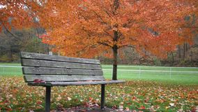 Locked down shot of a park bench in autumn near park stock footage