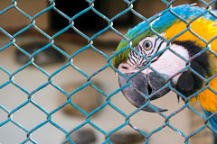 Locked parrot Royalty Free Stock Images