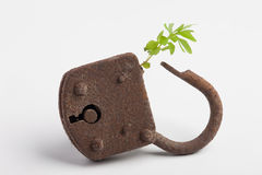 Locked plant. A plant is growing out of a lock royalty free stock images