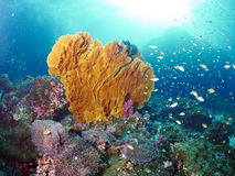 Lockern Sie Koralle auf Stockfotografie