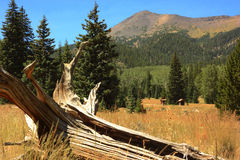 Lockett Meadow, Flagstaff Arizona Stock Image