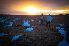 Lockfågel för snögås Royaltyfria Bilder