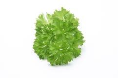 Lockig leafparsley Arkivbild