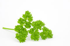 lockig parsley Royaltyfri Foto