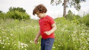 Lockig pojke som går på att blomma fältet på sommardagen Gullig pys som in går på gräsäng på sommarsemestern stock video