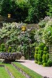 Lockiga blommor i trädgårdarna av Versailles, Frankrike Fotografering för Bildbyråer
