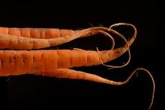 Lockiga morötter på svart Arkivfoto