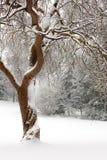 Lockiger Baum im Schnee Lizenzfreie Stockfotografie