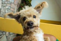 Lockiger Hund Stockfotografie