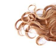 Lockigt brunt hår över vit Royaltyfri Foto
