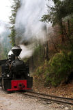 Locomotive in forest Royalty Free Stock Photography
