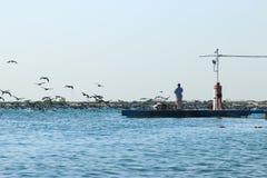 Locura de cormoranes Foto de archivo libre de regalías