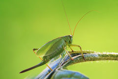 Locust Stock Photos