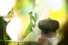 Locust on a colourful natural blur background stock images