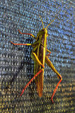 Locust on Fence at Sunset Royalty Free Stock Image