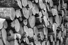 Locust firewood. Locust logs stacked for firewood Stock Photography