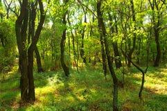 Locust grove in summer stock photos