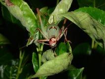 Locust on leaf Stock Photo