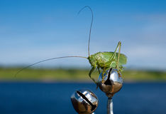 Locust sitting on a fishing rod. Locusts flew from nowhere and sat down on the fishing rod Royalty Free Stock Image
