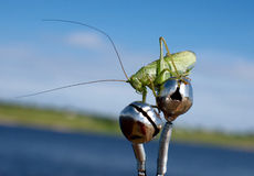 Locust sitting on a fishing rod. Locusts flew from nowhere and sat down on the fishing rod Stock Photography