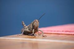 Locust Stock Photos