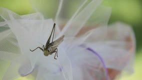 Locusta sul fiore video d archivio