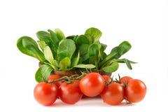 Locusta Valerianella, салат мозоли, салат овечки Стоковые Изображения