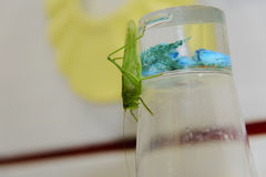 Locusts on the glass with toothbrushes Royalty Free Stock Images