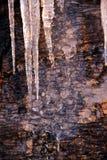 Lodów cykle na skale w ranku świetle zdjęcia royalty free