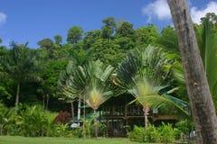 lodge пущи тропический стоковая фотография rf
