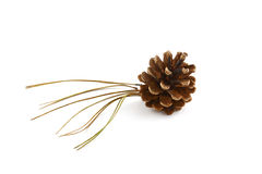Lodgepole pine cone and needles. Detail of Lodgepole pine cone and needles on white background Stock Photography