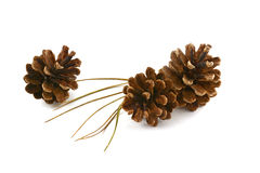 Lodgepole pine cones and needles Stock Photo