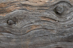 Lodgepole Pine Wood Detail Stock Images