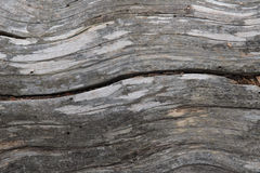 Lodgepole Pine Wood Stock Photos