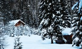 Lodges of old wood covered by snow, trees,winter in Dolomiti mountains, in Cadore, Italy Stock Image
