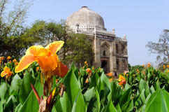 Lodi Gardens, New Delhi, India. Flowers in the front of Sheesh Gumbad Tomb in Lodi Gardens, New Delhi, India Stock Image
