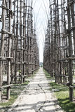 Lodi Lombardy, Italy: the vegetal cathedral Stock Image